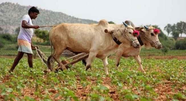 मुख्यमंत्री किसान मित्र ऊर्जा योजना